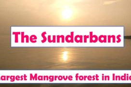 Visiting Sundarban